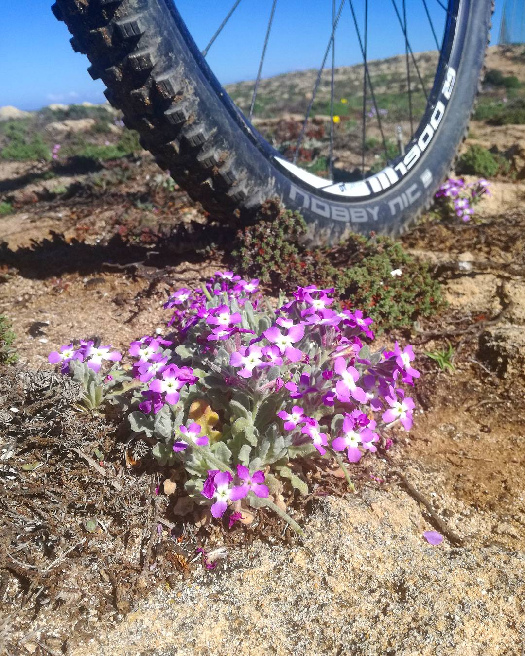 sardabike mtb sea sardinia trail guide